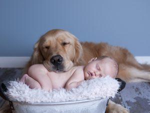 bebê e animal de estimacao
